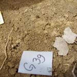 Zlatna naušnica u grobu 39